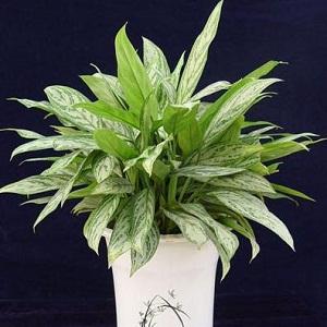 风水植物分类